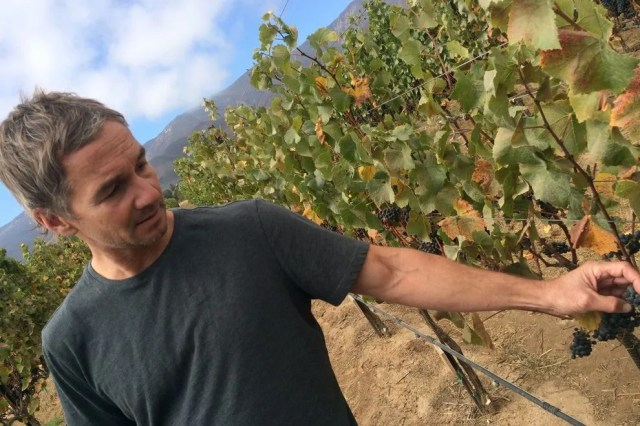 The vines are explored by Paul Clifton, winemaker director at Hahn Family Wines