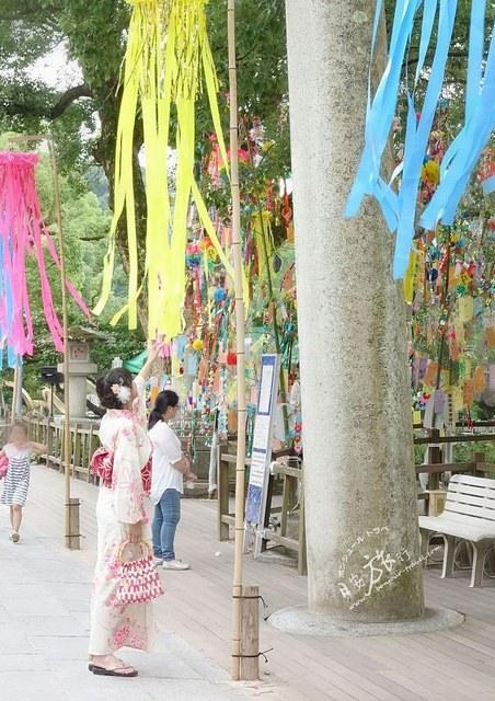 掛滿繽紛色彩於樹梢的日本七夕
