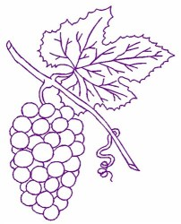 Grapes Outline Embroidery Design AnnTheGran