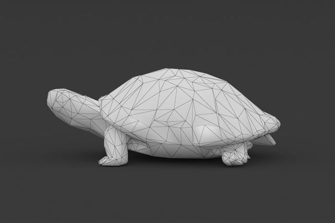 3D model Low Poly Turtle Tortoise  CGTrader