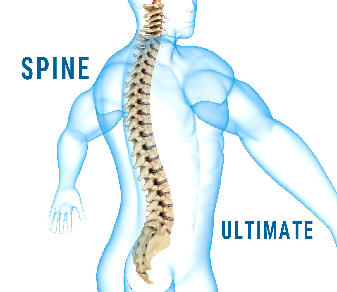 3d Model Human Spine With Spinal Cord And Body