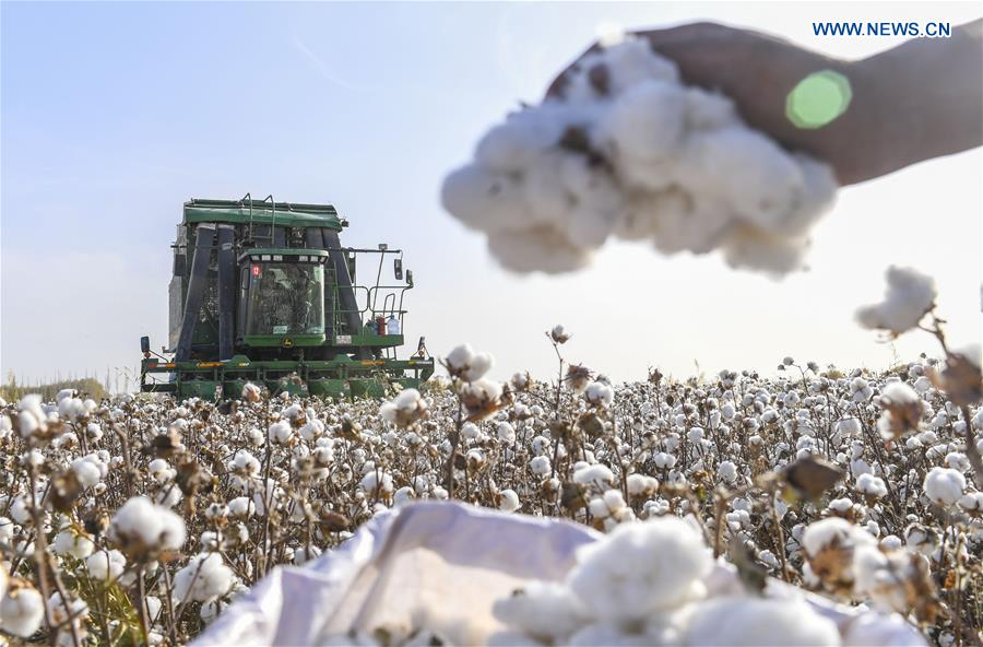 Bid to weaken cotton sector fated to fail - Opinion - Chinadaily.com.cn