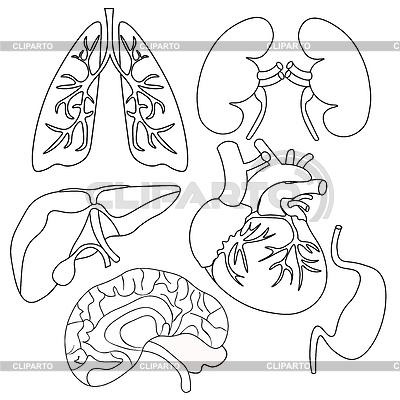 Diagram Of Kidney Tubules