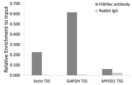 Anti-Histone H3 (acetyl K9) polyclonal antibody (CABT