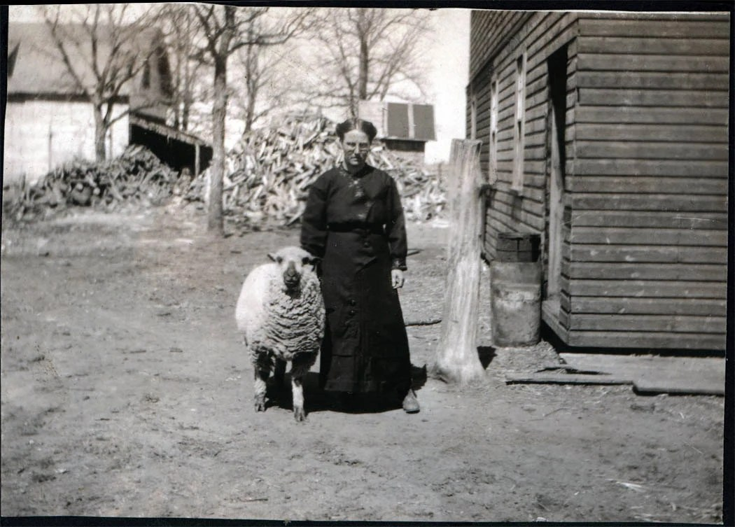 vintage photo 1910 WOman on Farm w Her Pet Big Sheep vintage photo