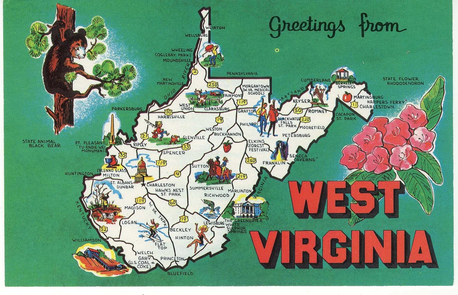 Vintage Postcard - Greeting from West Virginia - State Bear - State Flower - thevintagemode