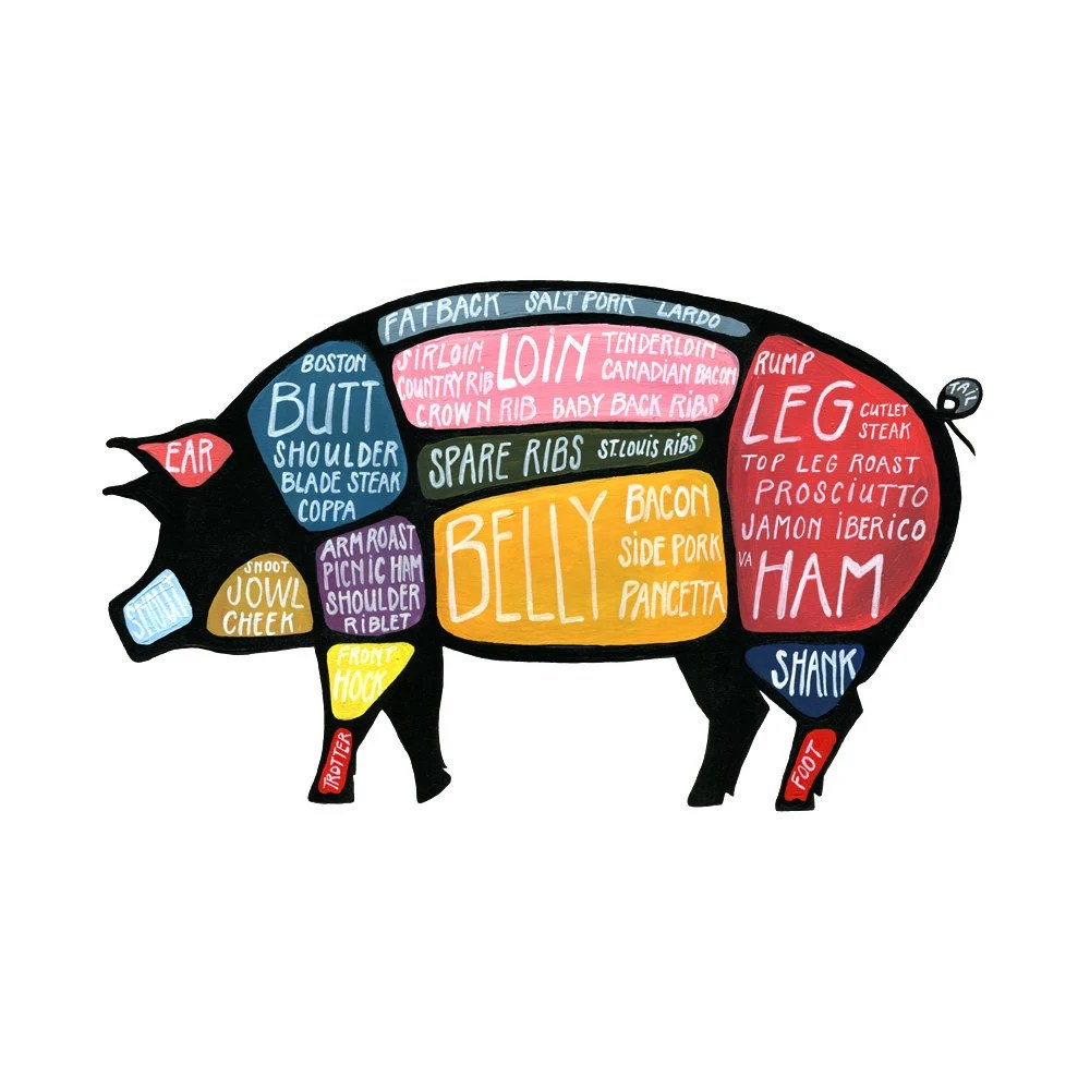 medium resolution of both cows and birds then pig across his lap and definitions sexing guinea pigs provide care and saw the diagram above pigs or just labe y shaped