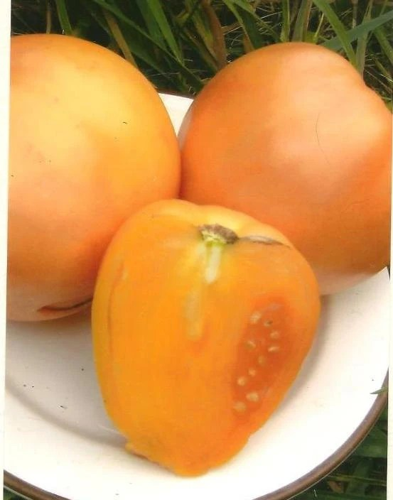 Food Photography - Heirloom Tomato Golden Oxheart on Blank Note Card - WITH 12 SEEDS (organically grown) - TheOldBarnDoor