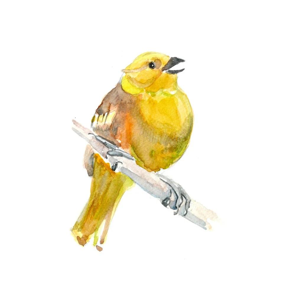Yellow bird Original Watercolor Painting artwork 13x19 bird on branch illustration wall home decor fine art animal - fairysomnia