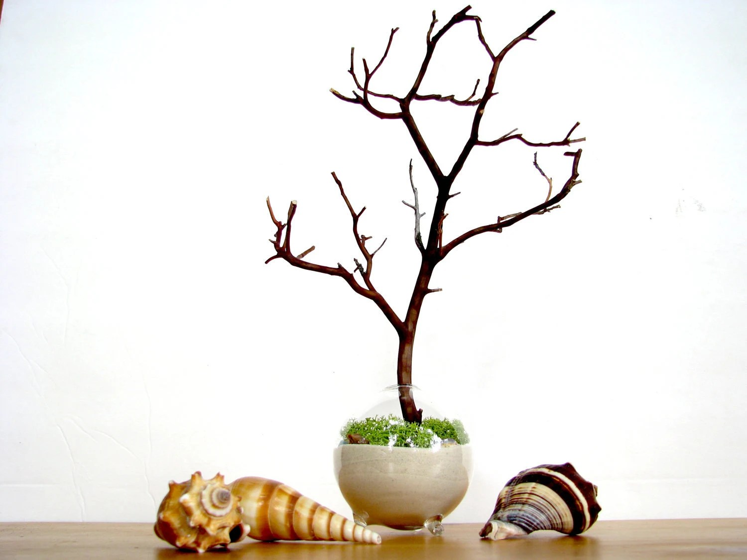 Single Globe Beach Manzanita Tree Moss terrarium - TinyTerrains