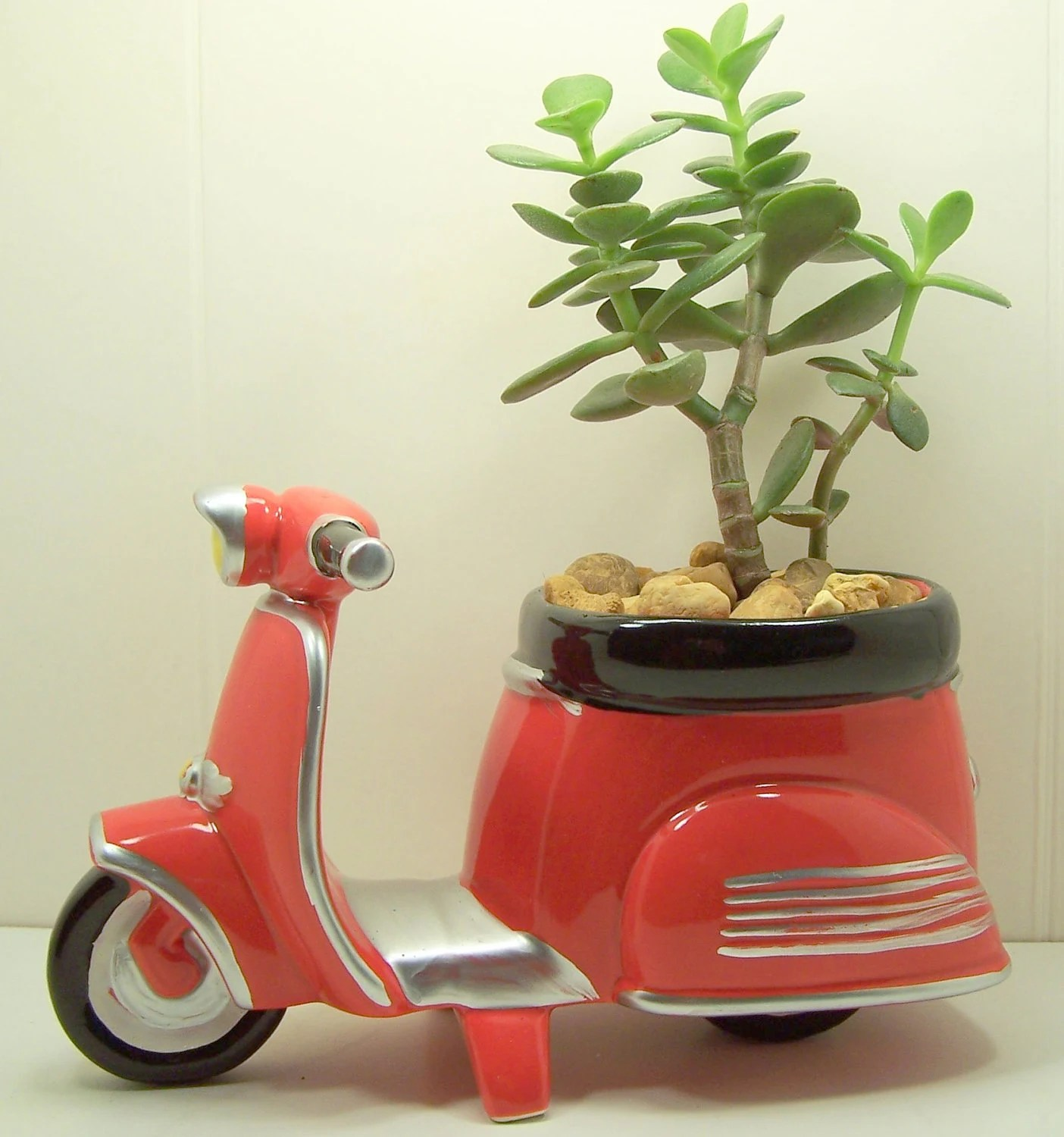 Succulent Jade planter Red Scooter diy kit