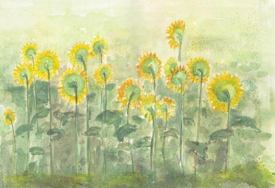 aguarela da flor original - girassol
