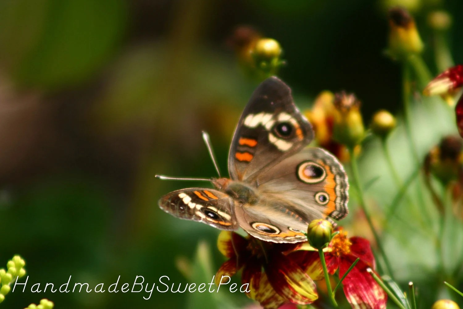 Moth, Insect, Flowers, Outdoors, Nature, Zoom, Fall, Orange, Brown, Home Decor, Photography