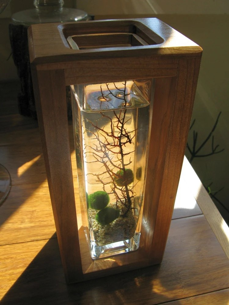Marimo Shadowbox Aquarium. Super Hip Underwater Terrarium