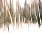 Abstract photo, woodland, surreal, dreamy, winter photography, muted colors, trees, white, nature, fantasy - Forest Edge 8 x 10 - gbrosseau