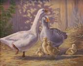 Giclee Print -  Geese - Goslings