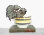 Mid Century Planter in Mustard and Gray (Grey if you Prefer) and Stripes