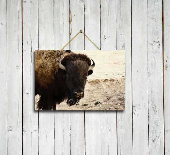 Watching - 10x15 print - Buffalo wall decor - Buffalo wall art - Brown rustic decor - Brown wall art - Brown decor - Bison art.