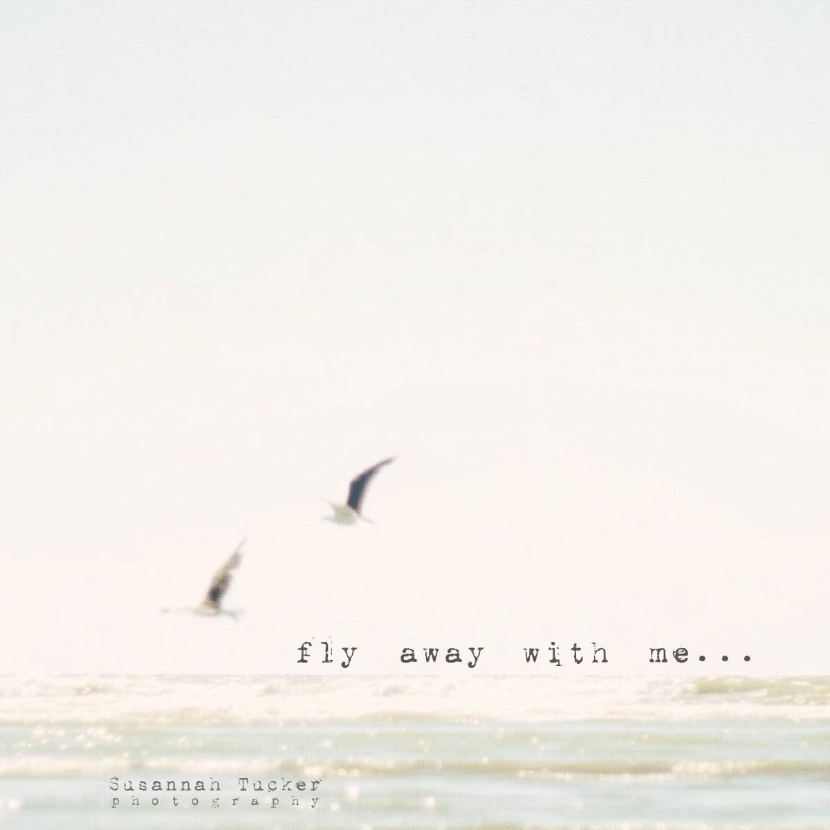 "fly away with me, to where we feel the ocean breeze - 8x8"" beach photograph - SusannahTucker"