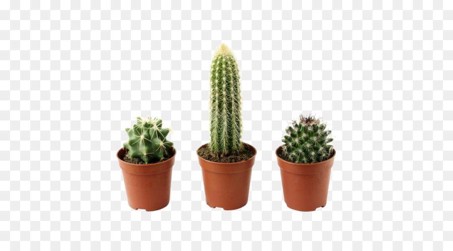 cactaceae flowerpot plante png