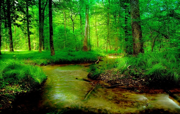 High Contrast Wallpaper For Iphone X Wallpaper Greens Forest Summer Stream Images For