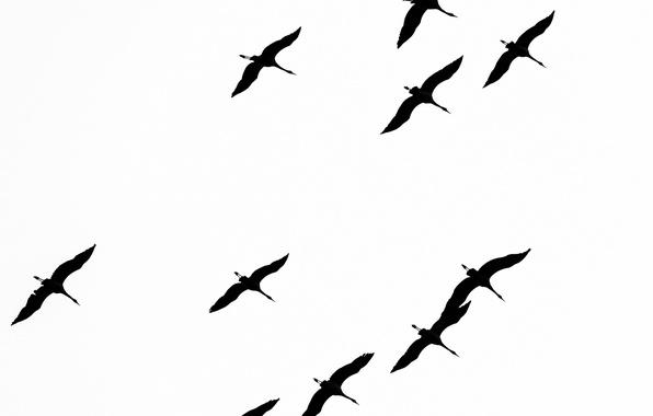 Wallpaper freedom, birds, flight images for desktop