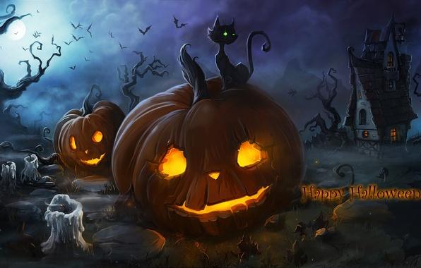 Fall Flowers And Pumpkins Wallpaper Wallpaper Cat Night Fog Fire Holiday The Moon