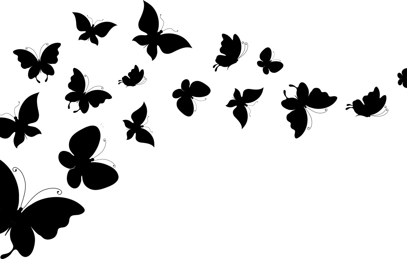 Wallpaper white, butterfly, background, wings, silhouettes