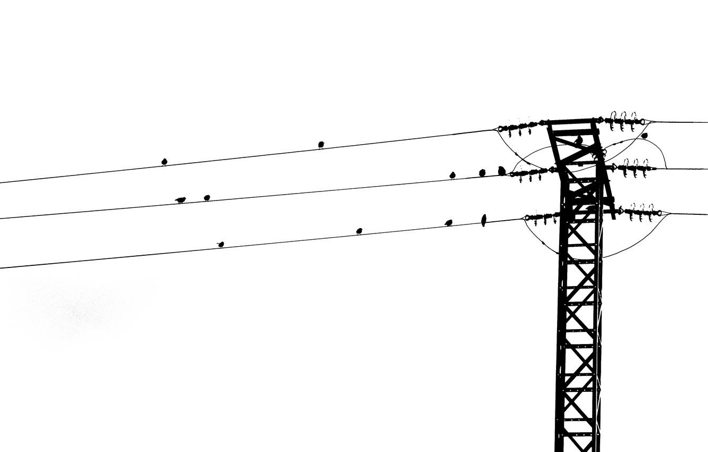 Wallpaper birds, song, power line images for desktop