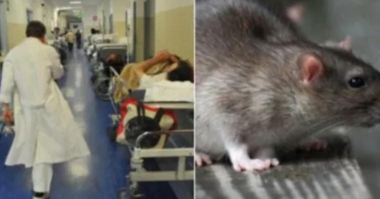 """Ospedale di Modena, topo morto nel pranzo: """"Chi lo ha messo"""", pista raccapricciante"""