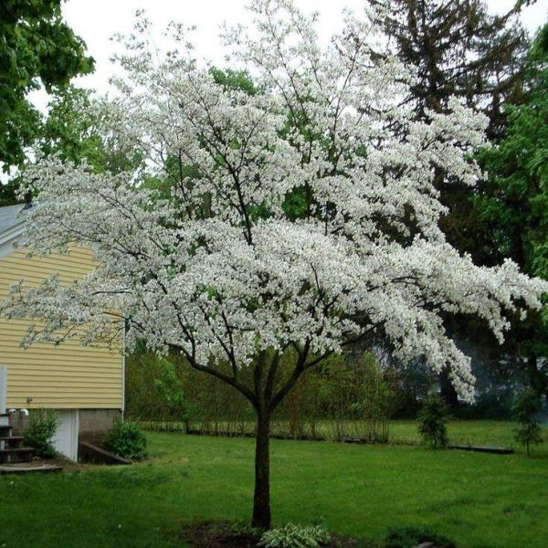 fertilizer dogwoods