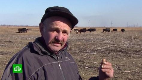 Бездомный фермер 8лет скитается по Ростовской области скоровами исобаками