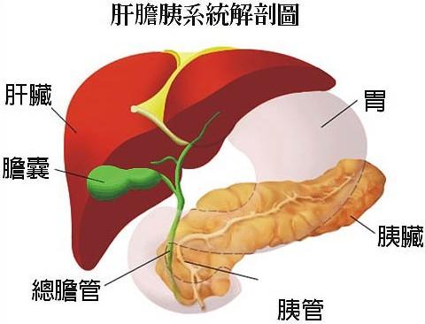 """令醫師束手無策的胰臟癌!""""危險因素""""一定要知道(圖)癌   胰臟癌   風險   療養保健   看中國網"""