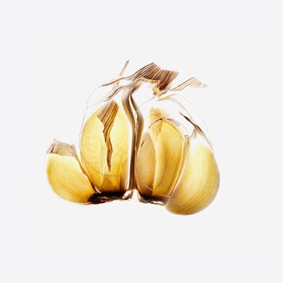 garlic-fight-cancer