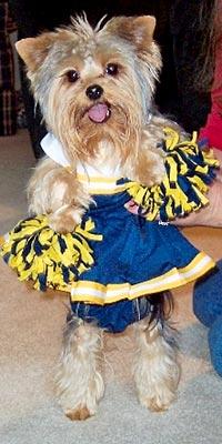 Your Pets in Halloween Costumes! - CHEERLEADER : People.com