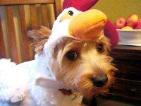 Your Pets in Halloween Costumes! - CHICKEN : People.com