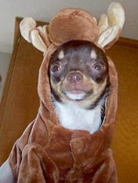 Your Pets in Halloween Costumes! - MOOSE : People.com