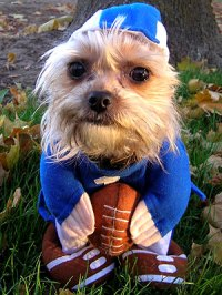 Your Pets in Halloween Costumes! - FOOTBALL PLAYER ...