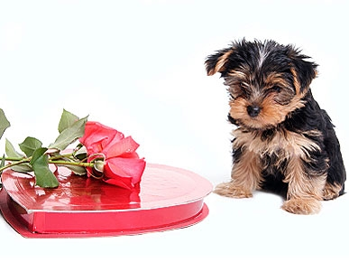 7 Tips For Keeping Your Pet Safe This Valentines Day