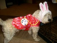 Pets in Costumes: Your Spook-tacular Halloween Furballs ...