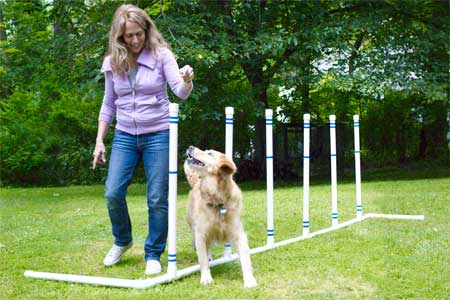 woman helping her dog through weave poles