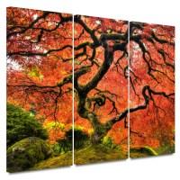 Art Wall 'Japanese Maple Tree' by John Black 3 Piece ...