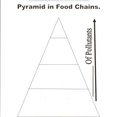 Blank Pyramid Diagram 5 2004 Jeep Tj Wiring Food Web Template Chain