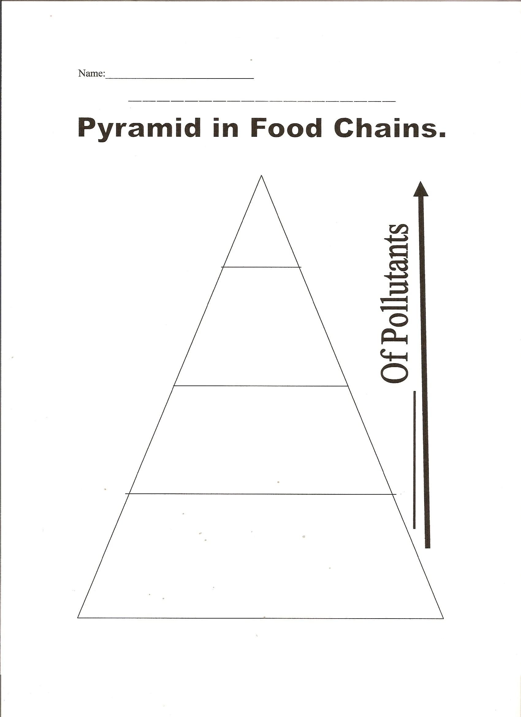 blank pyramid diagram 5 2003 saab 9 3 stereo wiring food web template chain
