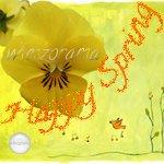 Grussbutton Happy Spring mit Stiefmuetterchen auf Fruehlingshintergrund
