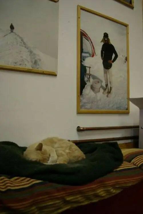 alcaldegato14 - El alcalde de un pueblo de Alaska es un gato (un gato de verdad)
