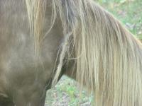Bigfoot Horse Hair Braiding | Musings of the Ape Immortal ...