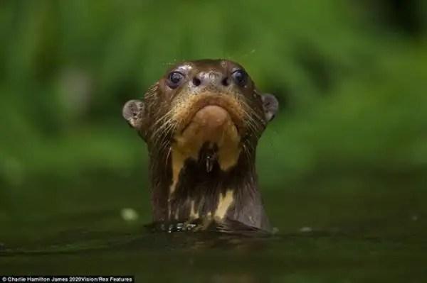 noticias Fotos únicas de animales