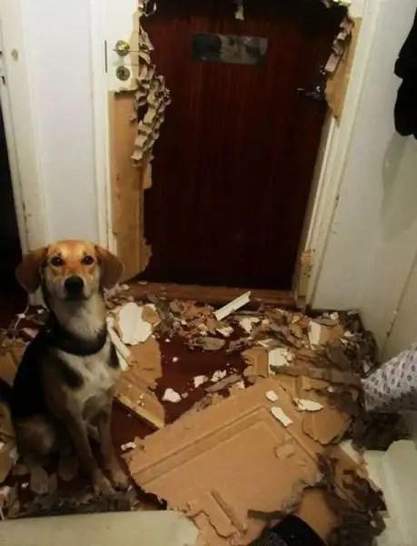 11213803 - 34 animales que te demuestran que tu no eres el jefe en casa