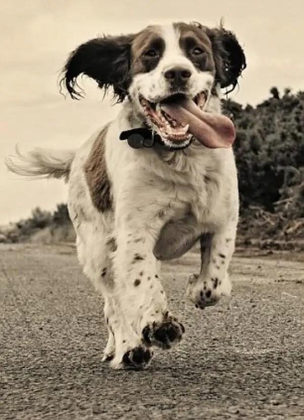 noticas Imágenes del mejor fotógrafo de perros del mundo